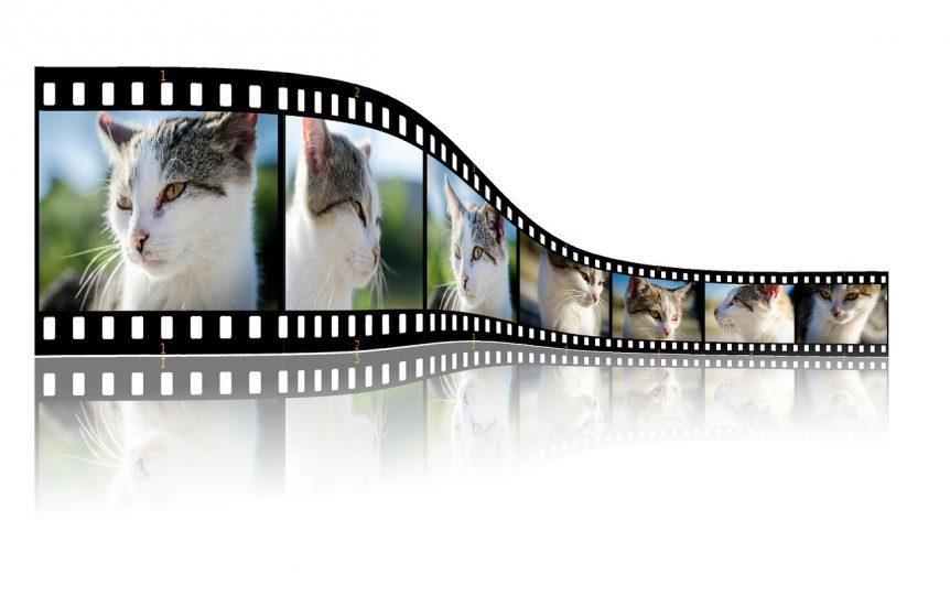 Cat Film